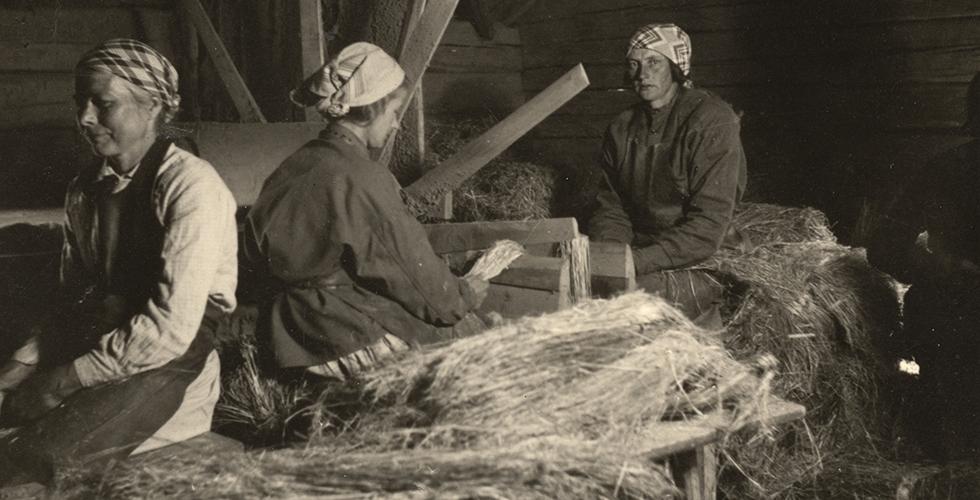 Linet: en kultur- och näringslivshistoria